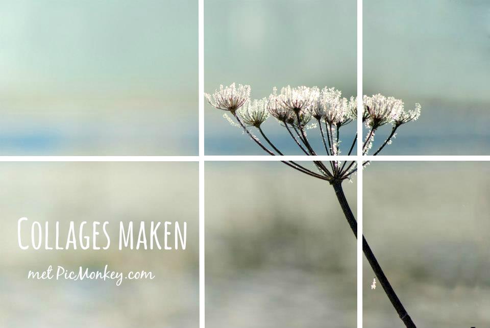 afbeeldingen | collage maken online